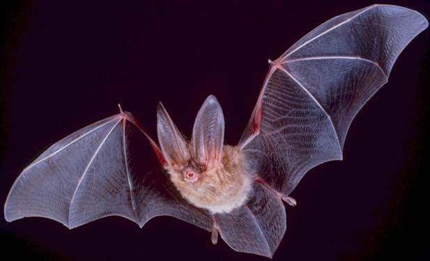 Animal nocturnal behavior