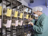 Biomedical scientists