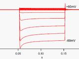 Inward-rectifier potassium ion channel