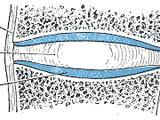Joints (anatomy)