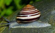 Snail on rock.jpg