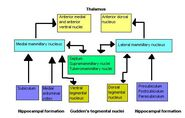 Mammillary-bodies-schematics