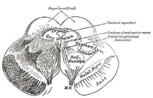 Tegmentum