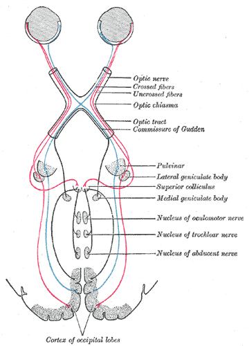 Sensory system | Psychology Wiki | Fandom