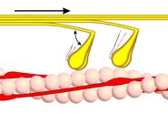 Querbrückenzyklus 2