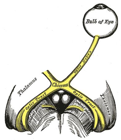 Optic tract