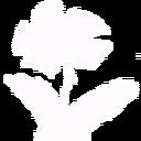 Gt flowerplanted