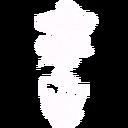 Gt rosespot
