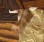 Cow head scrubbed