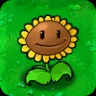 Sunflower1.png