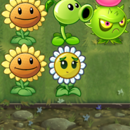 New Balloon Bloom In-Game