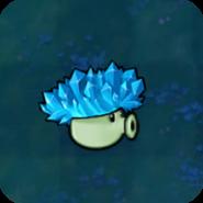 Cold-shroom