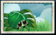 Spider Ivy