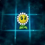 New Balloon Bloom Almanac