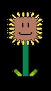 Sunflower BYL
