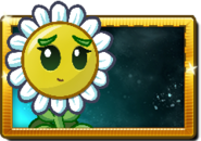 New Balloon Bloom Seed Packet (Lazy)