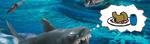 SharkHungry
