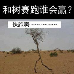 和树赛跑谁会赢?