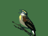 Yelling Bird