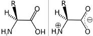 Amino acid zwitterion