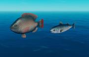 Tilapia and Mackerel.png