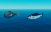 Herring and Pomfret.png