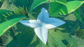White Flower on island.png
