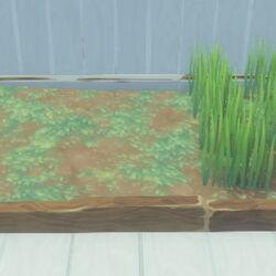 Grass Plot/fr