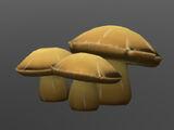 Пещерные грибы
