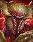 Gorlos Hellmaw-icon.png