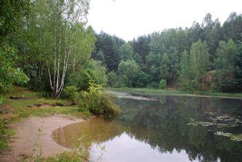 Wilkowyjskie jeziorko