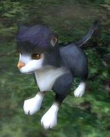 Wolf Evo 1 screenshot