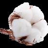 Cotton.png