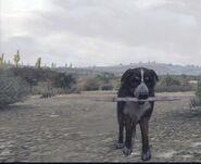 Dog-fetching-stick