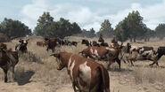 Rdr women cattle