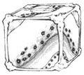 Genkishi box design 1 manga