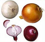 Onion v1.jpg