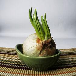 600px-Garlic growing.jpg