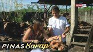 Pinas Sarap- Kara David, natutong magluto ng bagnet ng mga Ilocano!