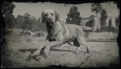 Rufus (Compendium).png