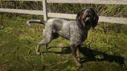 Bluetick Coonhound (Spiel)