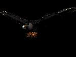 Adler3D.png