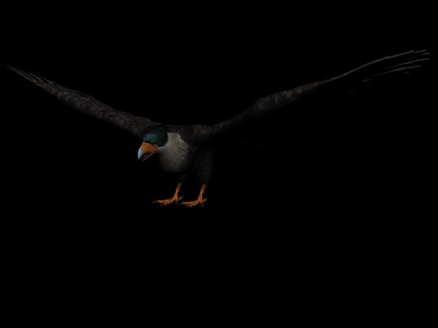 Adler (RDR)