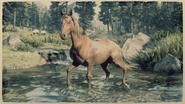 Tennessee Walker Fuchs 1