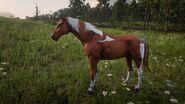 Kentucky Saddler5