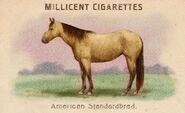 Zigarettenbilder Pferde American Standardbred