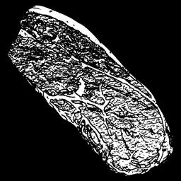 Pumafleisch