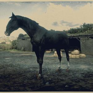 Kentucky Saddler Rappe 2.png