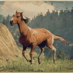 Kentucky Saddler Fuchs-Pinto 1.png