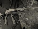 Varmint-Gewehr